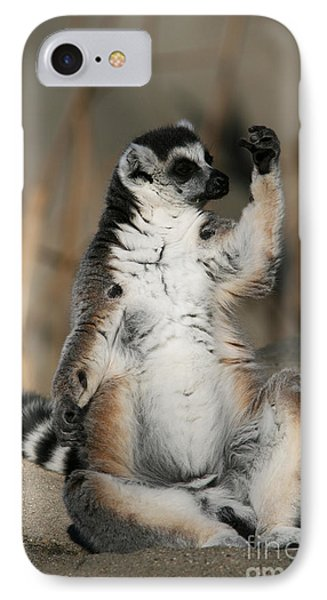 IPhone Case featuring the photograph Ring-tailed Lemur by Judy Whitton