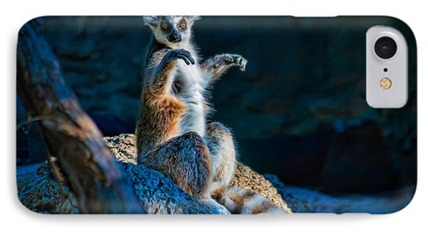 Ring-tailed Lemur IPhone Case by Tim Stanley