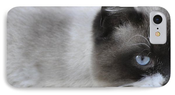 IPhone Case featuring the photograph Ringtail by Sarah McKoy