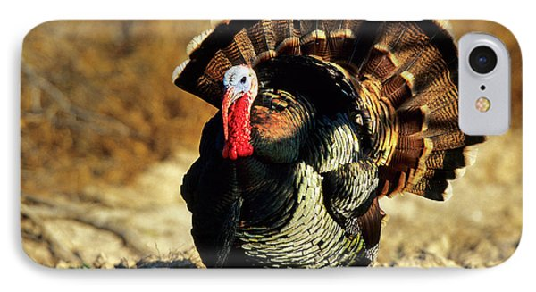 Rio Grande Wild Turkey (meleagris IPhone Case