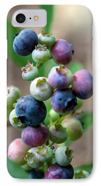 Ripening Blueberries IPhone Case
