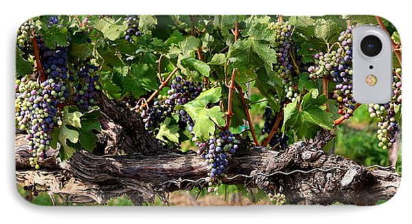 Ripening Grapes Phone Case by Carol Groenen