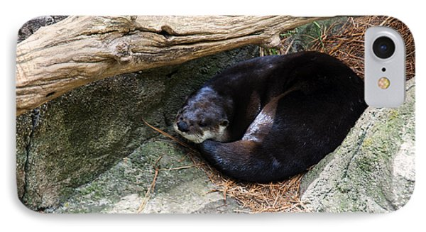 River Otter Resting IPhone Case