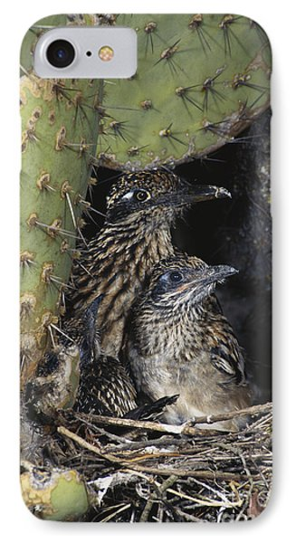 Roadrunners In Nest IPhone Case by Anthony Mercieca
