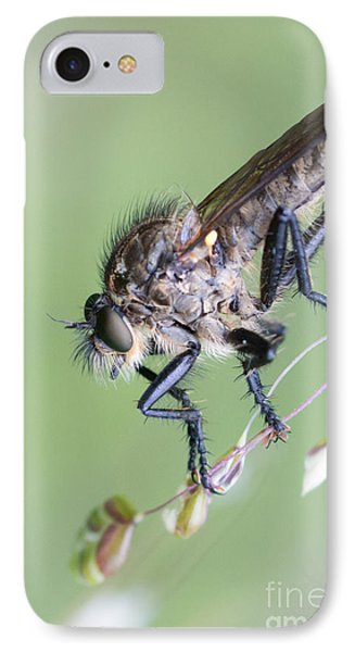 Robber Fly Asilinae Close Up IPhone Case by Jivko Nakev