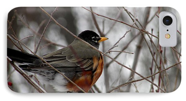 Robin Awaiting Spring IPhone Case