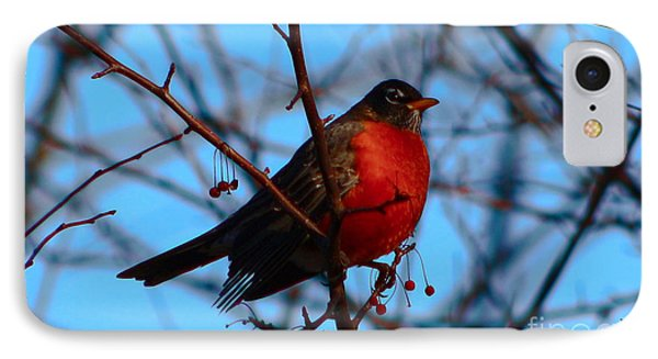 IPhone Case featuring the photograph Robin by Gena Weiser