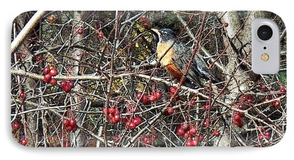 Robin In The Crab Apple Trees IPhone Case by Joy Nichols