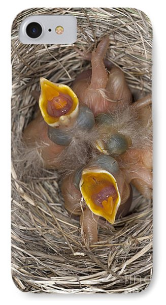 Robin Nestlings IPhone Case by Scott Camazine