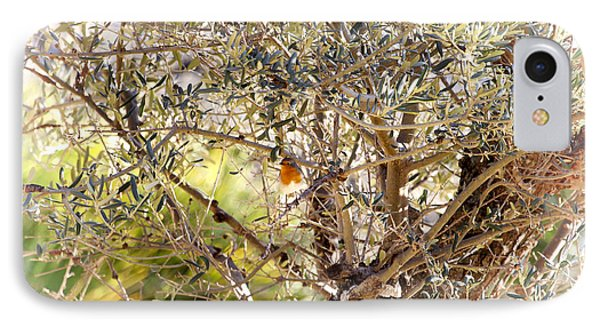Robin Perched On Olive Tree IPhone Case by Goyo Ambrosio