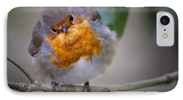Robin Redbreast IPhone Case by Shirley Mitchell