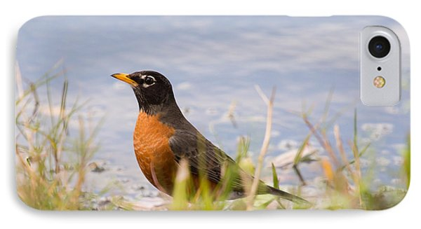 Robin Viewing Surroundings IPhone Case