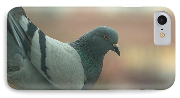 Rock Pigeon IPhone Case by Jivko Nakev