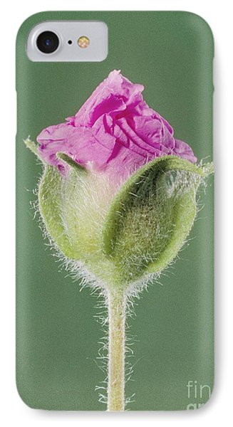 Rockrose Flowerbud Phone Case by Claude Nuridsany and Marie Perennou