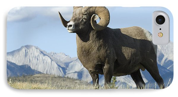 Rocky Mountain Big Horn Sheep Phone Case by Bob Christopher