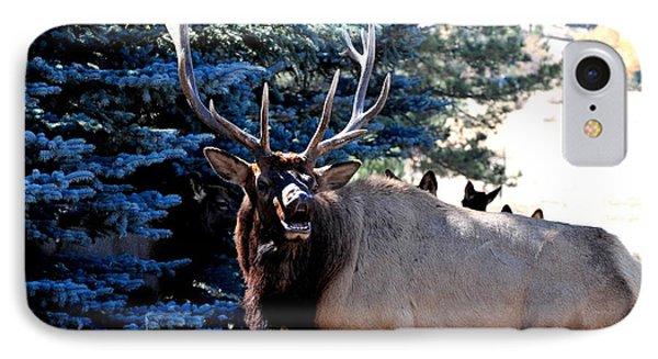 Rocky Mountain Elk - Flehmen Response IPhone Case