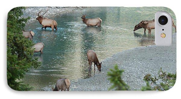 Rocky Mountain Elk Herd Crossing IPhone Case