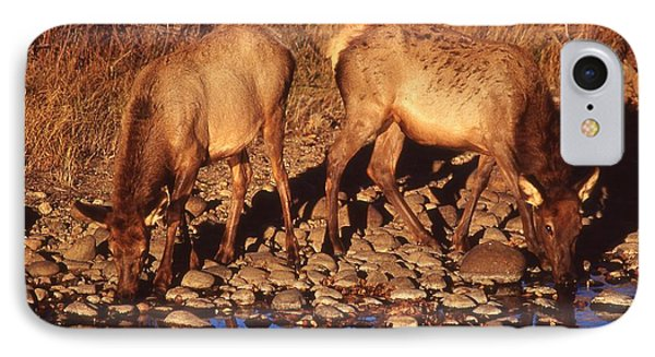 Rocky Mountain Elk Phone Case by T C Brown