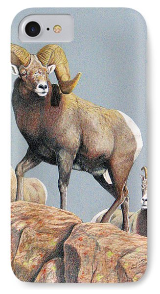 Rocky Mountain Ram Ewe And Lamb IPhone Case