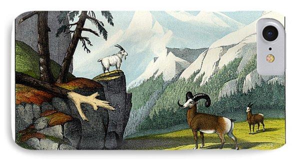 Rocky Mountain Sheep IPhone Case by Splendid Art Prints