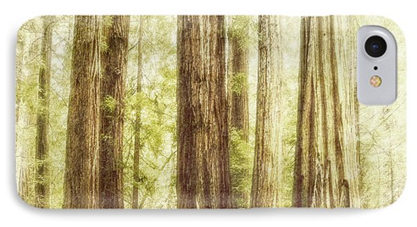 Romantic Forest Muir Woods National Monument California IPhone Case by Marianne Campolongo