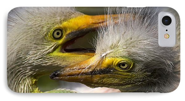 Rookery 7 IPhone Case by David Beebe