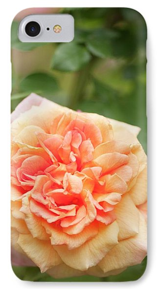Rosa 'alchymist' Flower IPhone Case by Maria Mosolova
