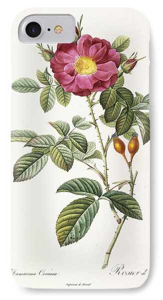 Rosa Damascena Coccina IPhone Case by Pierre Joseph Redoute