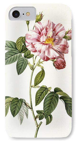 Rosa Gallica Versicolor IPhone Case by Pierre Joseph Redoute