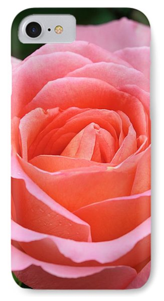 Rosa 'the Whitgift Rose' IPhone Case
