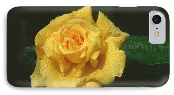 Rose 1 IPhone Case by Andy Shomock
