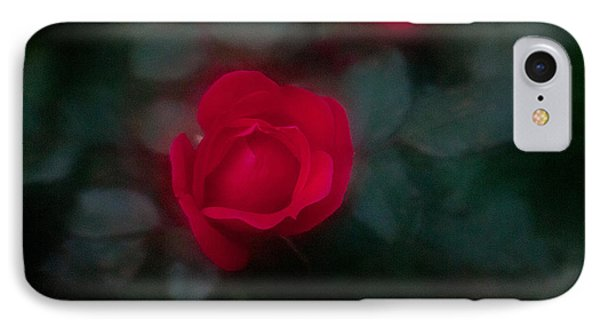 Rose 1 IPhone Case by Travis Burgess
