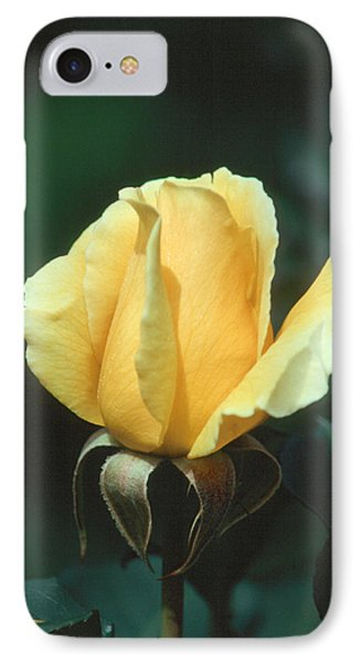 Rose 2 IPhone Case by Andy Shomock