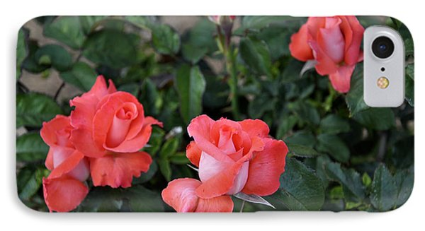 Rose 3 IPhone Case by Craig  T Burgwardt