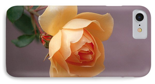 Rose 4 IPhone Case by Andy Shomock