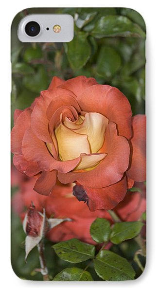 Rose 6 IPhone Case by Andy Shomock