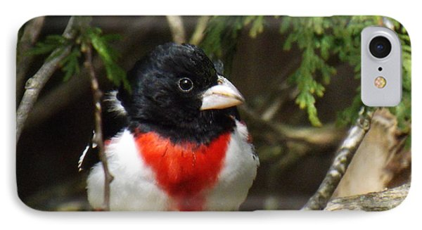 Rose Breasted Grosbeak Perched IPhone Case by Brenda Brown