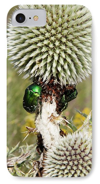 Rose Chafers And Ants On Thistle Flowers IPhone Case by Bob Gibbons