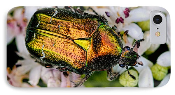 Rose Chafers IPhone Case