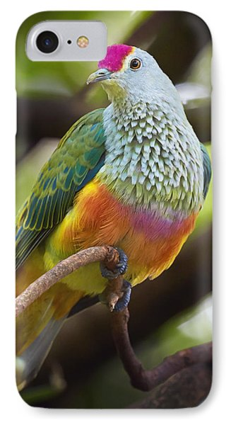 Rose-crowned Fruit-dove Australia IPhone Case by Martin Willis