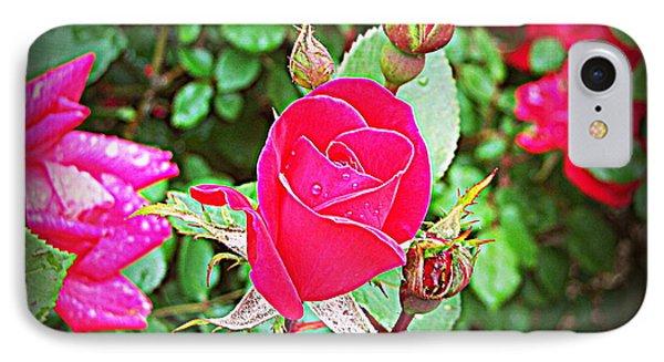 Rose Garden Centerpiece 2 IPhone Case by Pamela Hyde Wilson