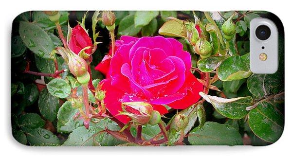 Rose Garden Centerpiece IPhone Case by Pamela Hyde Wilson