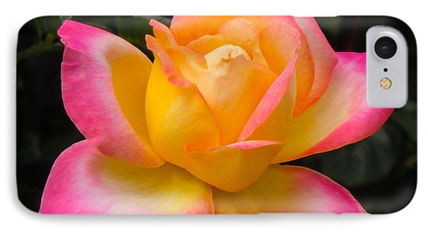 IPhone Case featuring the photograph Rose by Janis Knight