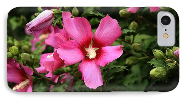 Rose Of Sharon Hibiscus 2 IPhone Case by Margaret Newcomb