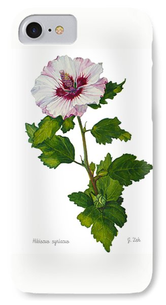 Rose Of Sharon - Hibiscus Syriacus IPhone Case by Janet  Zeh