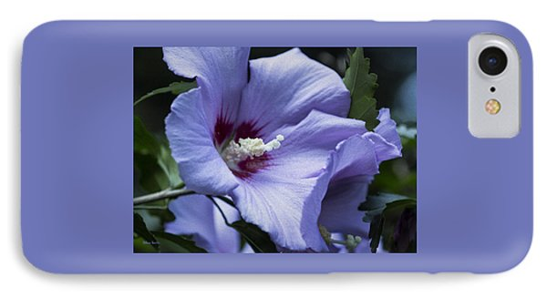 Rose Of Sharon Phone Case by Rebecca Samler
