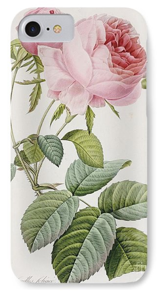 Rose IPhone Case by Pierre Joesph Redoute