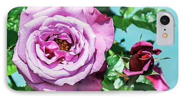 Rose (rosa 'barbra Sterisand') IPhone Case by Brian Gadsby
