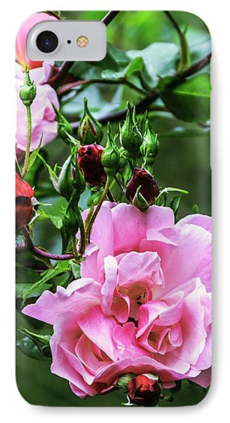 Rose (rosa 'blossomtime') IPhone Case by Brian Gadsby