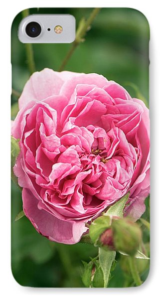 Rose (rosa 'harlow Carr' ) Flower IPhone Case by Adrian Thomas